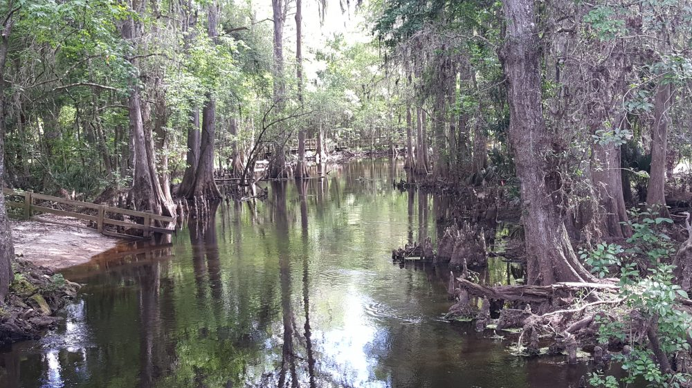 Discover Gainesville, Alachua County and Surrounding Areas